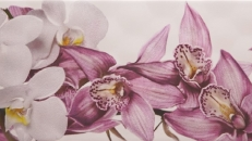 full_sote_orchid_2015261149